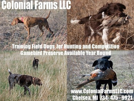 Michigan hunting dog training